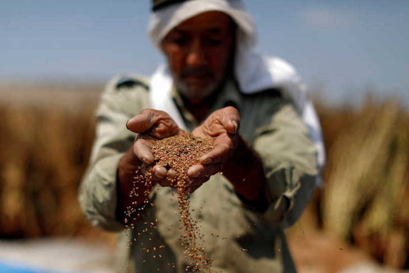 A Palestinian man refines sesame to be sold in markets, near Jenin in the Israeli-occupied West Bank, Sept. 1, 2019. Read more: https://www.al-monitor.com/pulse/originals/2019/09/palestine-agriculture-endowment-lands-development-investment.html#ixzz5zm2uFSxd